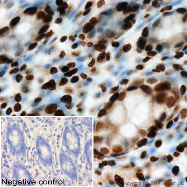 Immunohistochemistry (Formalin/PFA-fixed paraffin-embedded sections) - Anti-Histone H1 antibody [AE-4] (ab71594)