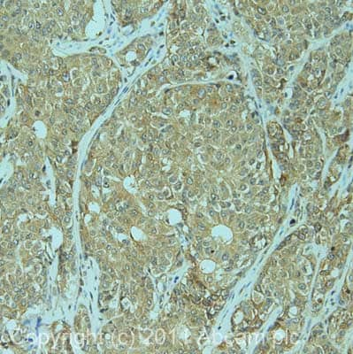 Immunohistochemistry (Formalin/PFA-fixed paraffin-embedded sections) - Anti-KIF1C antibody (ab72238)