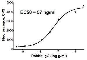 Sandwich ELISA - Goat Anti-Rabbit IgG H&L (Phycoerythrin) preadsorbed (ab72465)