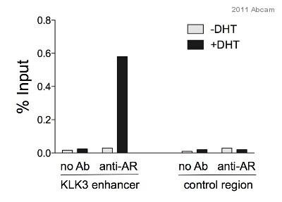 ChIP - Anti-Androgen Receptor antibody - ChIP Grade (ab74272)