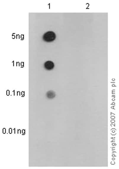 Dot Blot - Anti-p53 (phospho S33) antibody [EP2393Y] (ab75867)