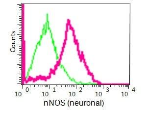 Flow Cytometry - Anti-nNOS (neuronal) antibody [EP1855Y] (ab76067)