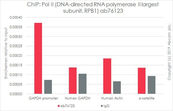 ChIP - Anti-RNA polymerase II RPB1 antibody [EPR1509Y] - ChIP Grade (ab76123)