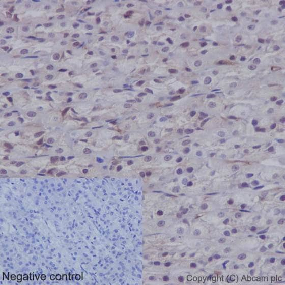 Immunohistochemistry (Formalin/PFA-fixed paraffin-embedded sections) - Anti-YAP1 (phospho S127) antibody [EP1675Y] (ab76252)