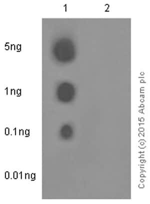 Dot Blot - Anti-eIF4E (phospho S209) antibody [EP2151Y] (ab76256)