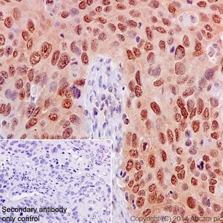 Immunohistochemistry (Formalin/PFA-fixed paraffin-embedded sections) - Anti-eIF4E (phospho S209) antibody [EP2151Y] (ab76256)