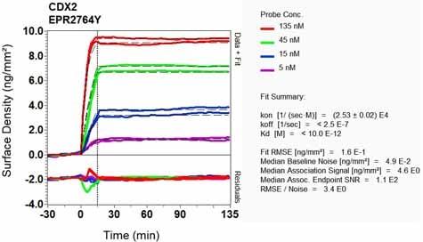 Other - Anti-CDX2 antibody [EPR2764Y] (ab76541)