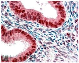 Immunohistochemistry (Formalin/PFA-fixed paraffin-embedded sections) - Anti-HP1 alpha antibody (ab77256)