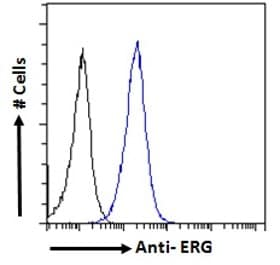 Flow Cytometry - Anti-ERG antibody (ab77258)