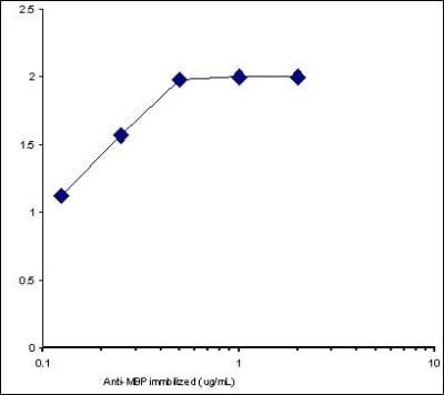Sandwich ELISA - Anti-Myelin Basic Protein antibody (HRP) (ab77895)