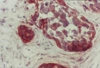 Immunohistochemistry (Frozen sections) - Anti-PTEN antibody [A2b1] (ab79156)