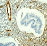 Immunohistochemistry (Formalin/PFA-fixed paraffin-embedded sections) - Anti-Caveolin-2 antibody [EPR2220] - Caveolae Marker (ab79397)