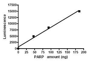 Functional Studies - Recombinant human PARP1 protein (ab79663)