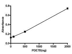 Functional Studies - Recombinant human PDE7B protein (ab79800)