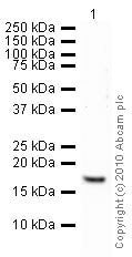 Western blot - Anti-Histone H3 (tri methyl K4) antibody - ChIP Grade (ab8580)