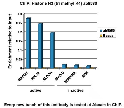 ChIP - Anti-Histone H3 (tri methyl K4) antibody - ChIP Grade (ab8580)