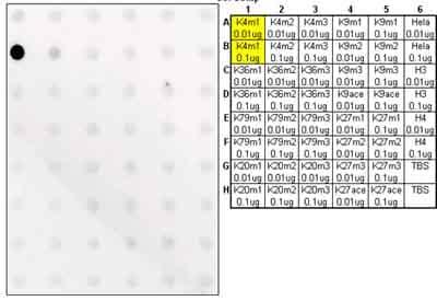 斑点印迹-抗组蛋白H3(单甲基K4)抗体-芯片级(AB8895)
