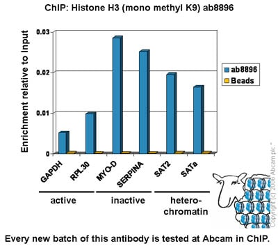 ChIP - Anti-Histone H3 (mono methyl K9) antibody - ChIP Grade (ab8896)