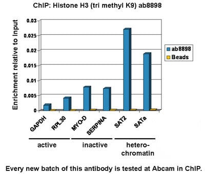 ChIP - Anti-Histone H3 (tri methyl K9) antibody - ChIP Grade (ab8898)