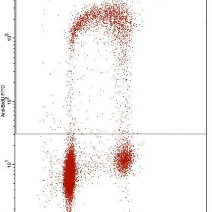 Flow Cytometry - Anti-BrdU antibody [IIB5] (ab8955)