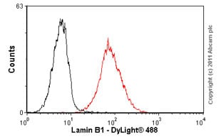 Flow Cytometry - Anti-Lamin B1 antibody [119D5-F1] - Nuclear Envelope Marker (ab8982)