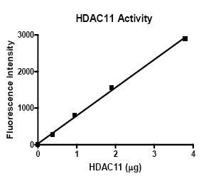 Functional Studies - Recombinant human HDAC11/HD11 protein (ab80281)