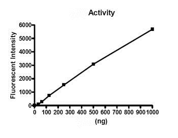 Functional Studies - Recombinant human Prolyl Endopeptidase protein (ab80376)