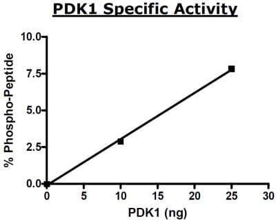Functional Studies - Recombinant human PDPK1 protein (ab80411)