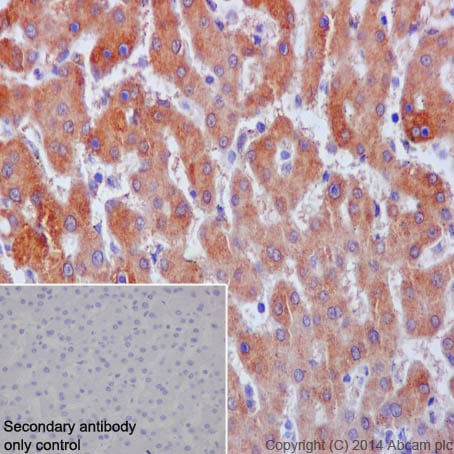 Immunohistochemistry (Formalin/PFA-fixed paraffin-embedded sections) - Anti-Neuropilin 1 antibody [EPR3113] (ab81321)