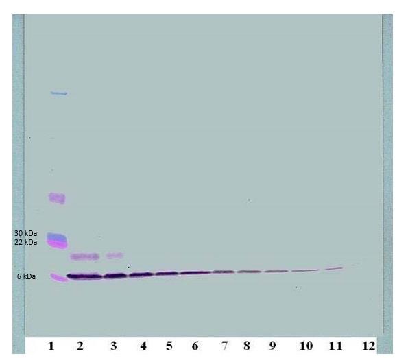 Western blot - Biotin Anti-Macrophage Inflammatory Protein 1 alpha / CCL3 antibody (ab83139)