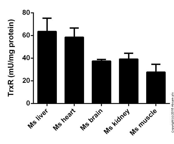 Functional Studies - beta Thioredoxin reductase Assay Kit (ab83463)