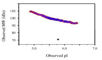 Functional Studies - Recombinant human TrkB protein (Fc Chimera) (ab83565)