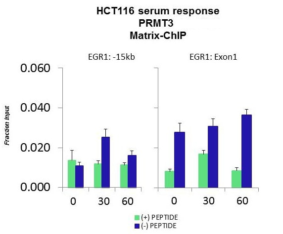 ChIP - Anti-PRMT3 antibody (ab84202)