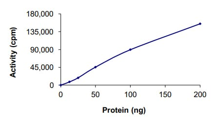 Functional Studies - Recombinant human CDK6 + CCND3 protein (ab84557)