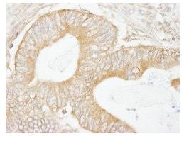 Immunohistochemistry (Formalin/PFA-fixed paraffin-embedded sections) - Anti-USP5 antibody (ab84695)