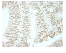 Immunohistochemistry (Formalin/PFA-fixed paraffin-embedded sections) - Anti-Brd4 antibody (ab84776)