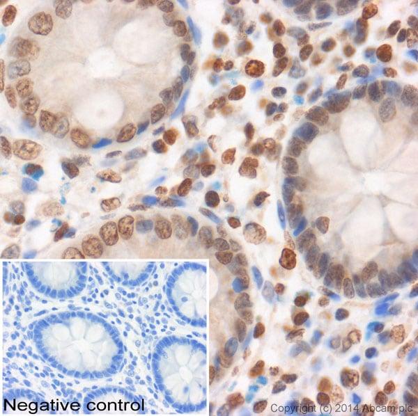 Immunohistochemistry (Formalin/PFA-fixed paraffin-embedded sections) - Anti-Histone H2A antibody - ChIP Grade (ab88770)