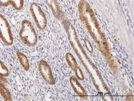 Immunohistochemistry (Formalin/PFA-fixed paraffin-embedded sections) - Anti-Annexin A1/ANXA1 antibody (ab88865)