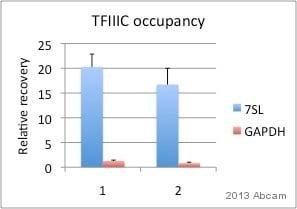 ChIP - Anti-TFIIIC110 antibody (ab89113)