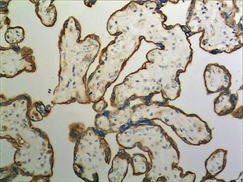 Immunohistochemistry (Formalin/PFA-fixed paraffin-embedded sections) - Anti-Cystatin SA/CST2 antibody [MM0233- 5M60] (ab89302)