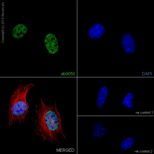 Immunocytochemistry/ Immunofluorescence - Anti-Histone H3 (tri methyl K36) antibody - ChIP Grade (ab9050)