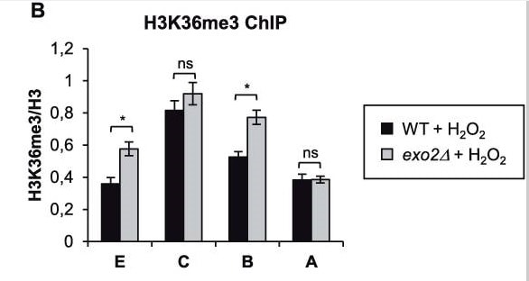 ChIP - Anti-Histone H3 (tri methyl K36) antibody - ChIP Grade (ab9050)