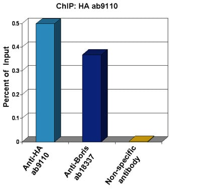 ChIP - Anti-HA tag antibody - ChIP Grade (ab9110)