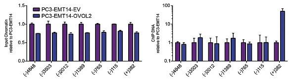 ChIP - Anti-V5 tag antibody (ab9116)