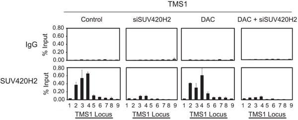 ChIP - Anti-KMT5C/SUV4-20h2 antibody (ab91224)