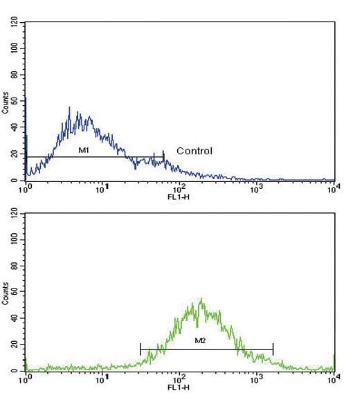 Flow Cytometry - Anti-IGFBP2 antibody (ab91404)