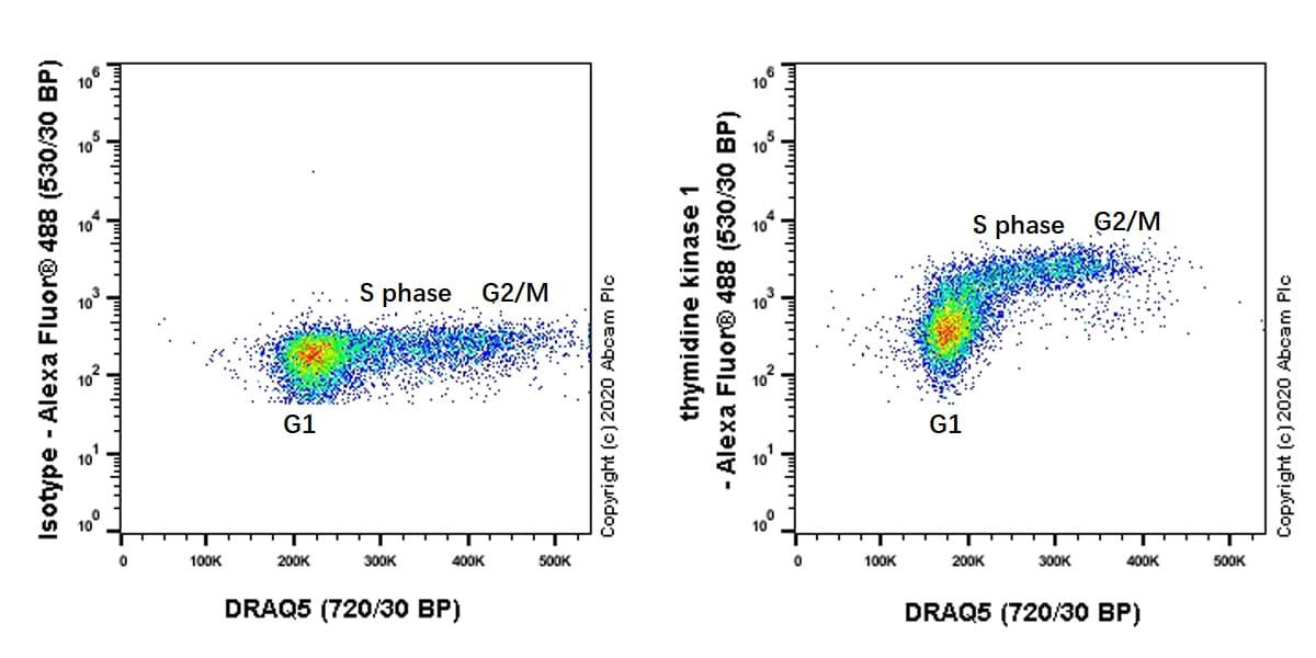 Flow Cytometry (Intracellular) - Anti-Thymidine Kinase 1/TK1 antibody [EPR3194] (ab91651)