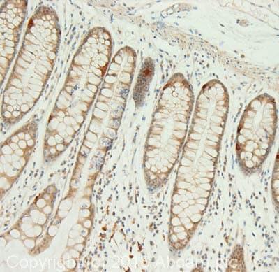 Immunohistochemistry (Formalin/PFA-fixed paraffin-embedded sections) - Anti-NPSR1 antibody (ab92425)