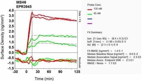 Other - Anti-MSH6 antibody [EPR3945] (ab92471)