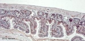 Immunohistochemistry (Formalin/PFA-fixed paraffin-embedded sections) - Anti-TGF beta 1 antibody (ab92486)